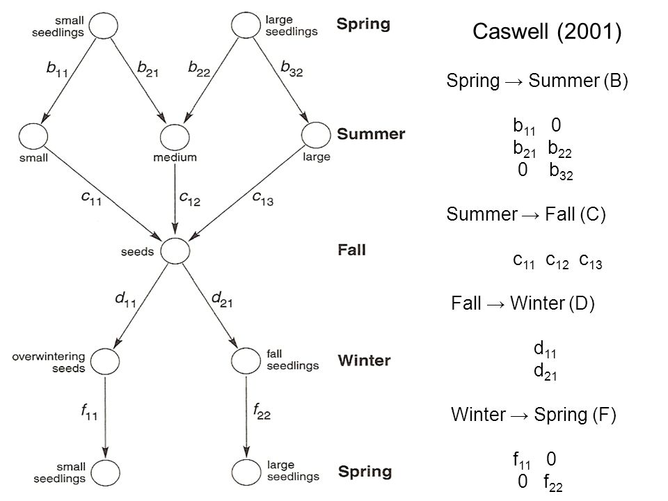 Caswell (2001) Spring → Summer (B)