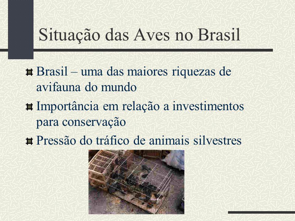 Situação das Aves no Brasil