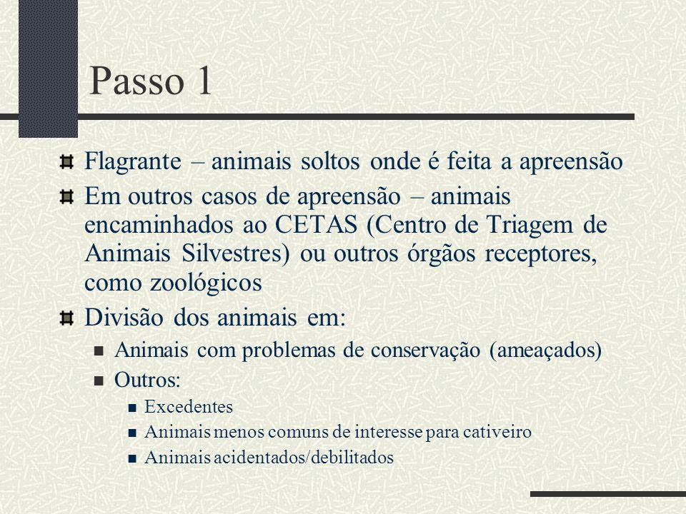 Passo 1 Flagrante – animais soltos onde é feita a apreensão