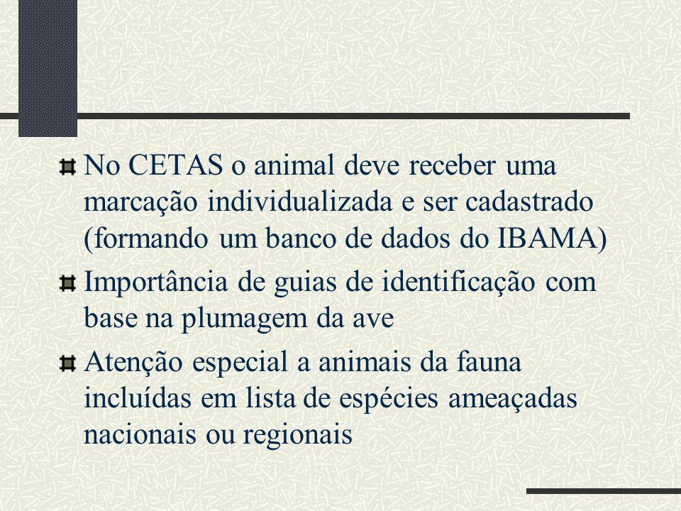 No CETAS o animal deve receber uma marcação individualizada e ser cadastrado (formando um banco de dados do IBAMA)