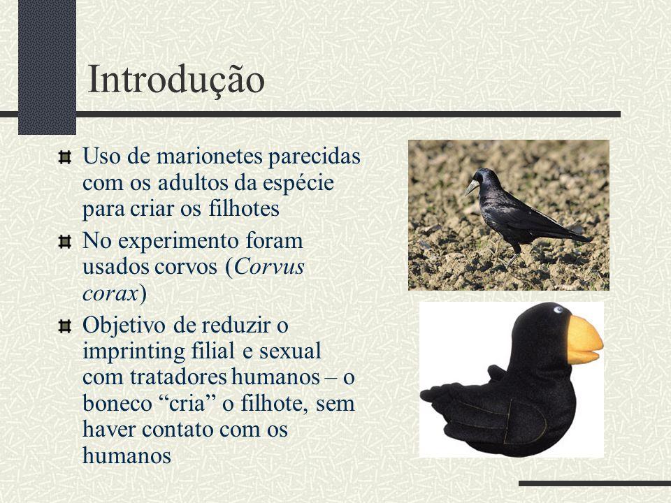 Introdução Uso de marionetes parecidas com os adultos da espécie para criar os filhotes. No experimento foram usados corvos (Corvus corax)