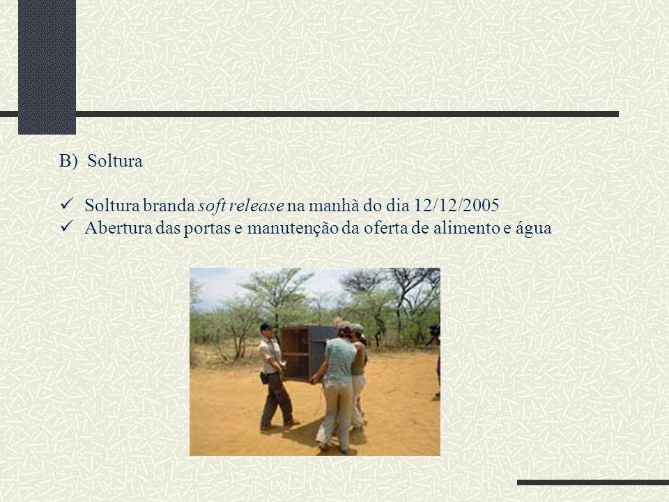 B) Soltura Soltura branda soft release na manhã do dia 12/12/2005.