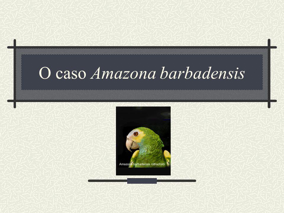 O caso Amazona barbadensis