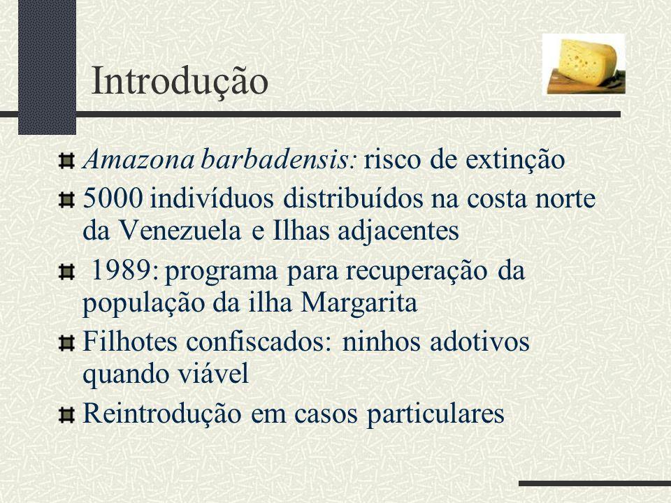 Introdução Amazona barbadensis: risco de extinção