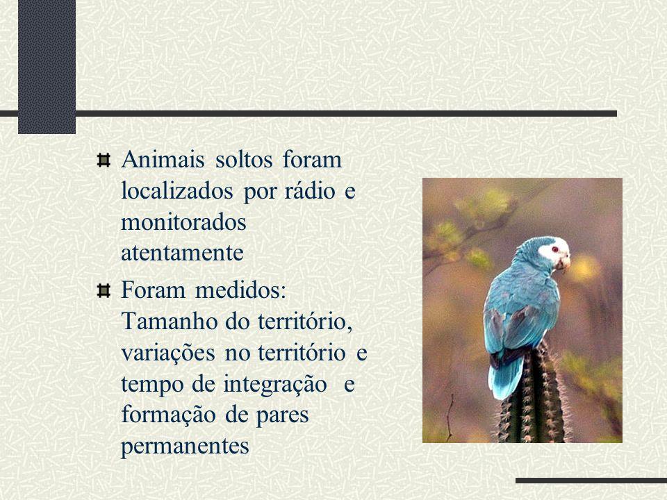 Animais soltos foram localizados por rádio e monitorados atentamente