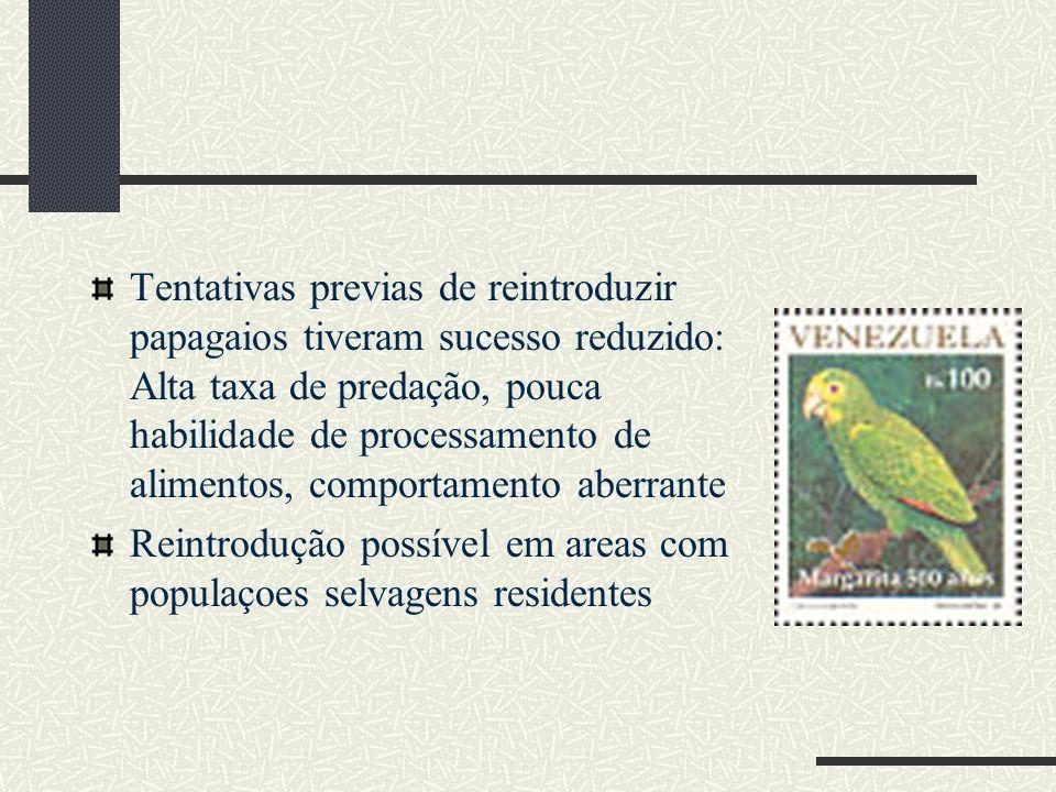 Tentativas previas de reintroduzir papagaios tiveram sucesso reduzido: Alta taxa de predação, pouca habilidade de processamento de alimentos, comportamento aberrante