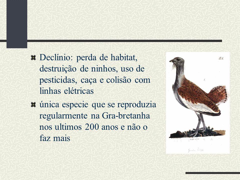 Declínio: perda de habitat, destruição de ninhos, uso de pesticidas, caça e colisão com linhas elétricas
