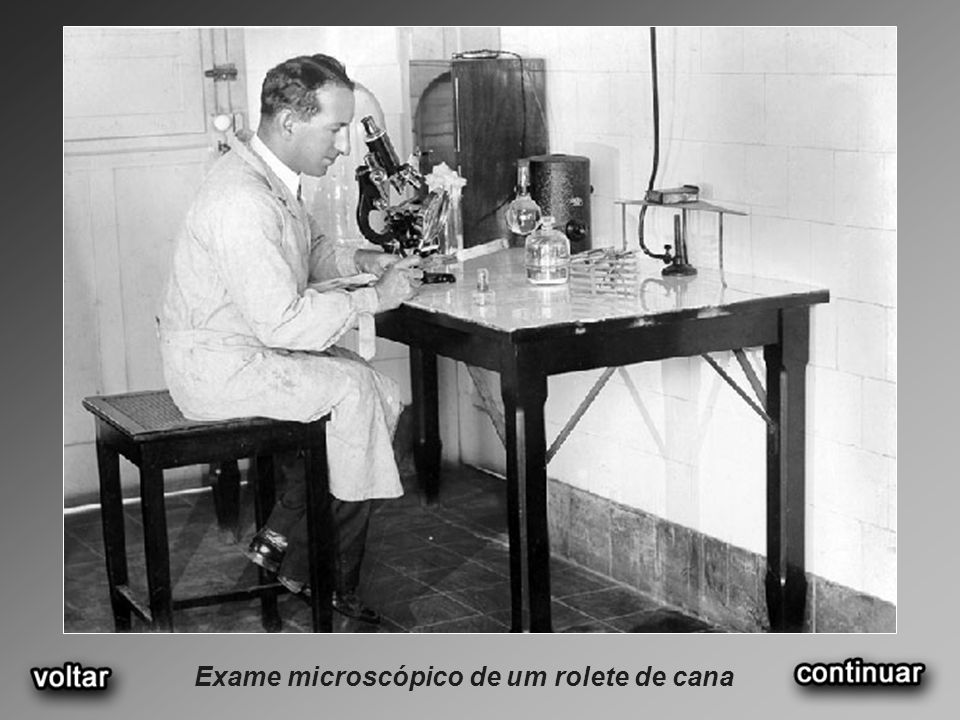 Exame microscópico de um rolete de cana