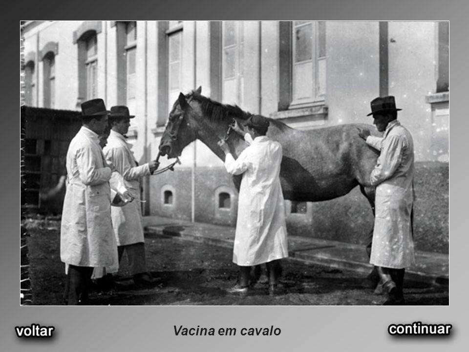Vacina em cavalo