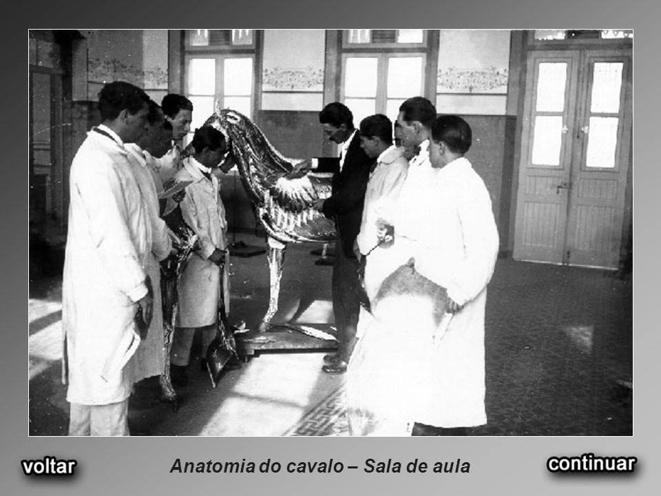 Anatomia do cavalo – Sala de aula