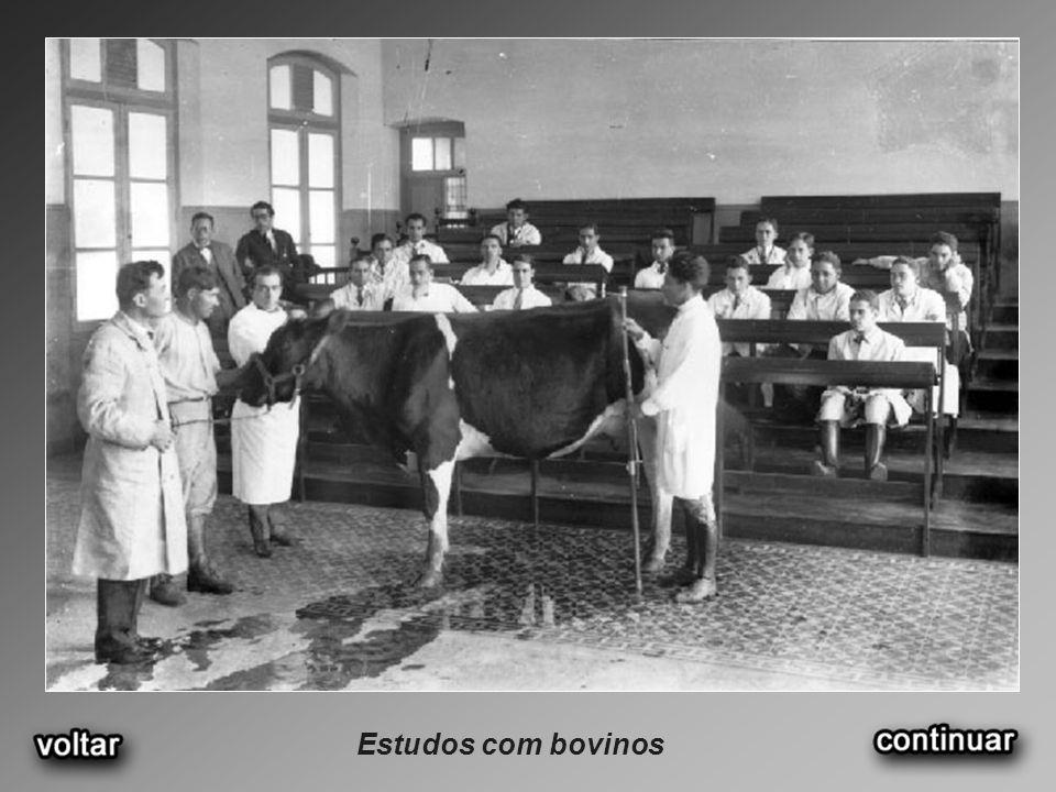 Estudos com bovinos