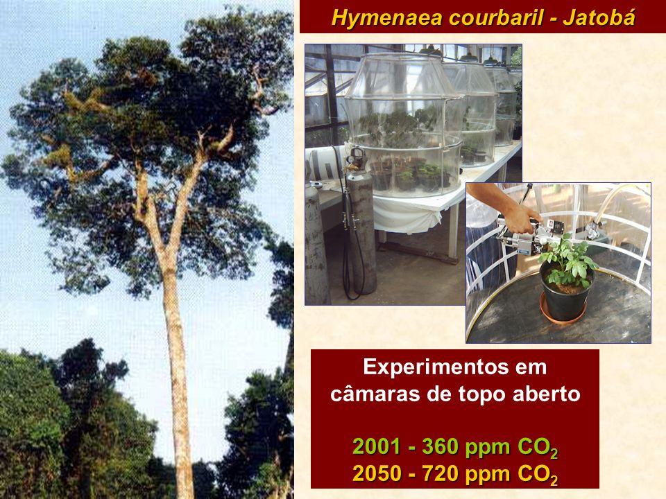 Hymenaea courbaril - Jatobá Experimentos em câmaras de topo aberto