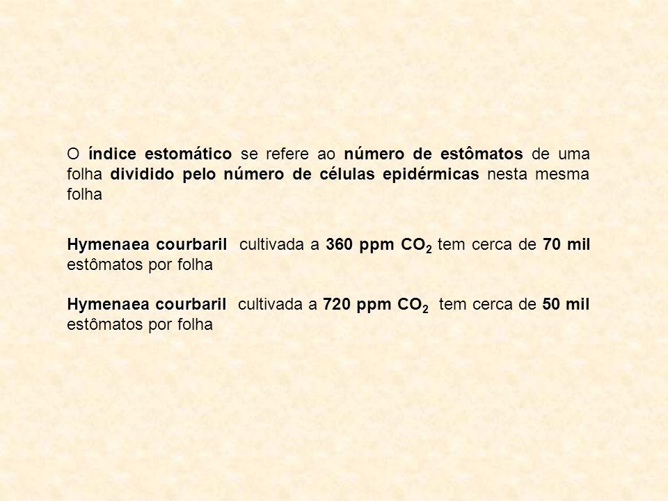 O índice estomático se refere ao número de estômatos de uma folha dividido pelo número de células epidérmicas nesta mesma folha