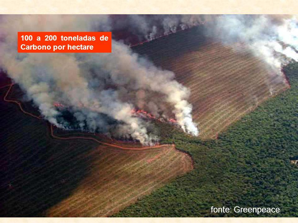 100 a 200 toneladas de Carbono por hectare