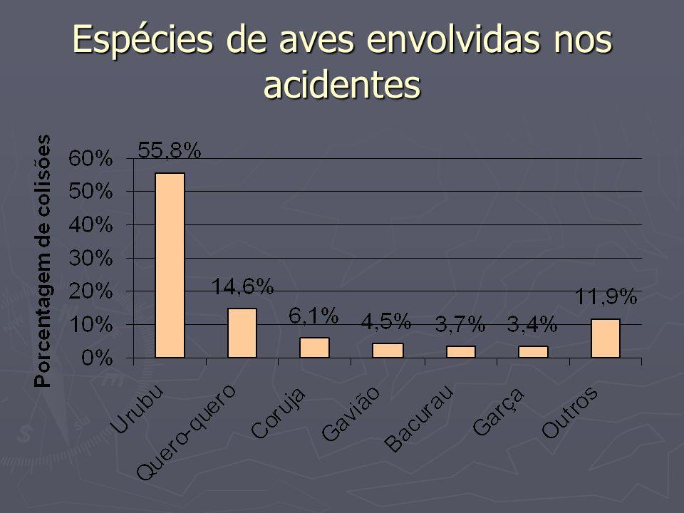 Espécies de aves envolvidas nos acidentes