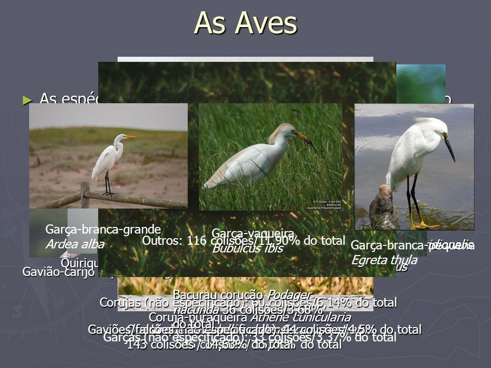 As Aves As espécies de aves que mais colidem com aeronaves no Brasil são (dados de 1980-2000): Garça-branca-grande Ardea alba.