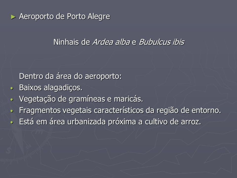 Ninhais de Ardea alba e Bubulcus ibis