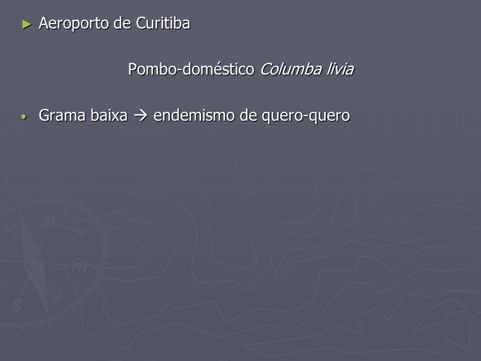 Pombo-doméstico Columba livia
