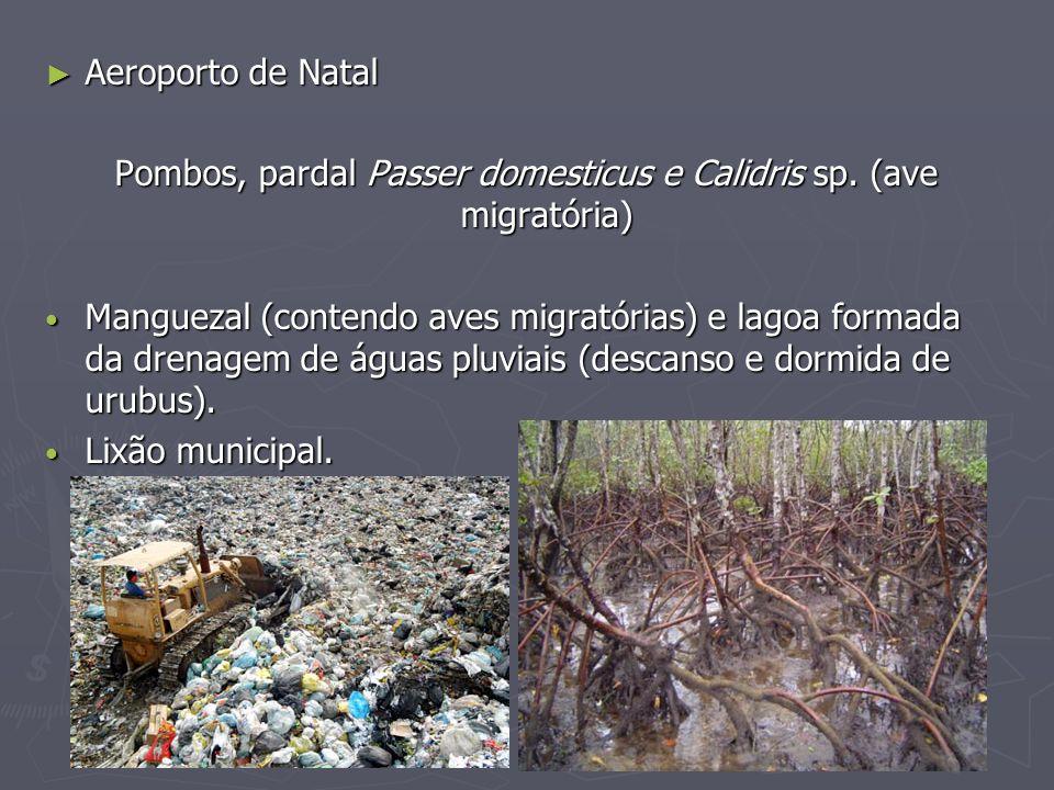 Pombos, pardal Passer domesticus e Calidris sp. (ave migratória)