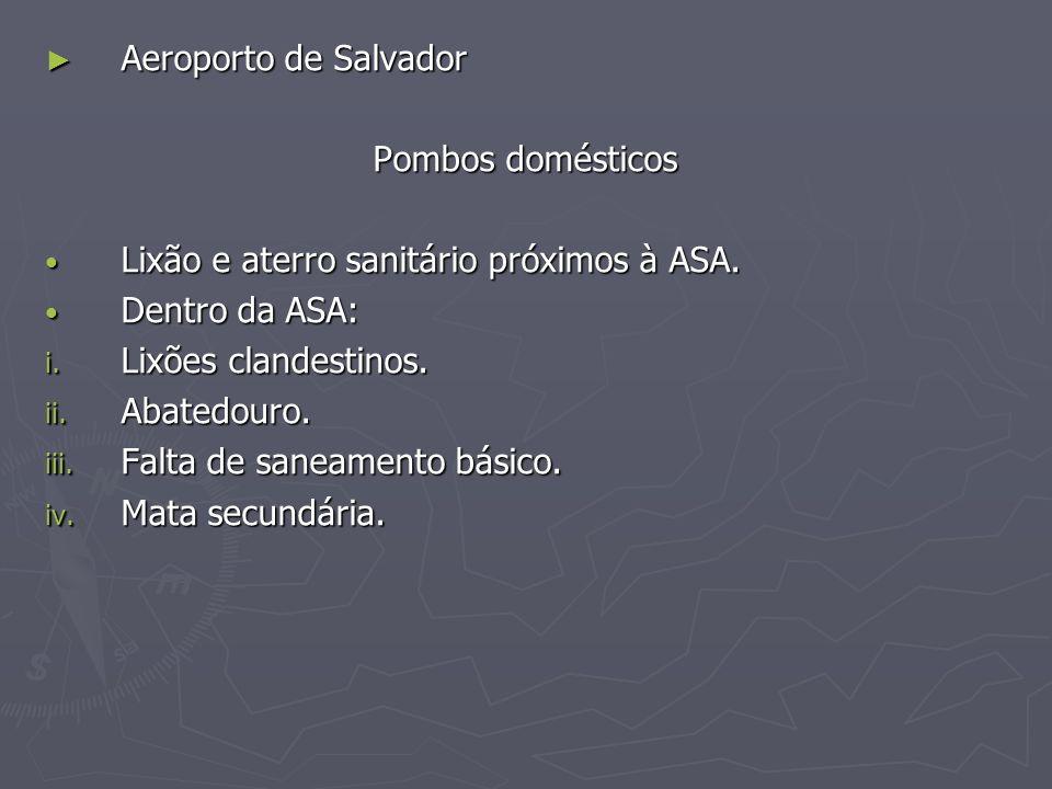Aeroporto de Salvador Pombos domésticos. Lixão e aterro sanitário próximos à ASA. Dentro da ASA: Lixões clandestinos.