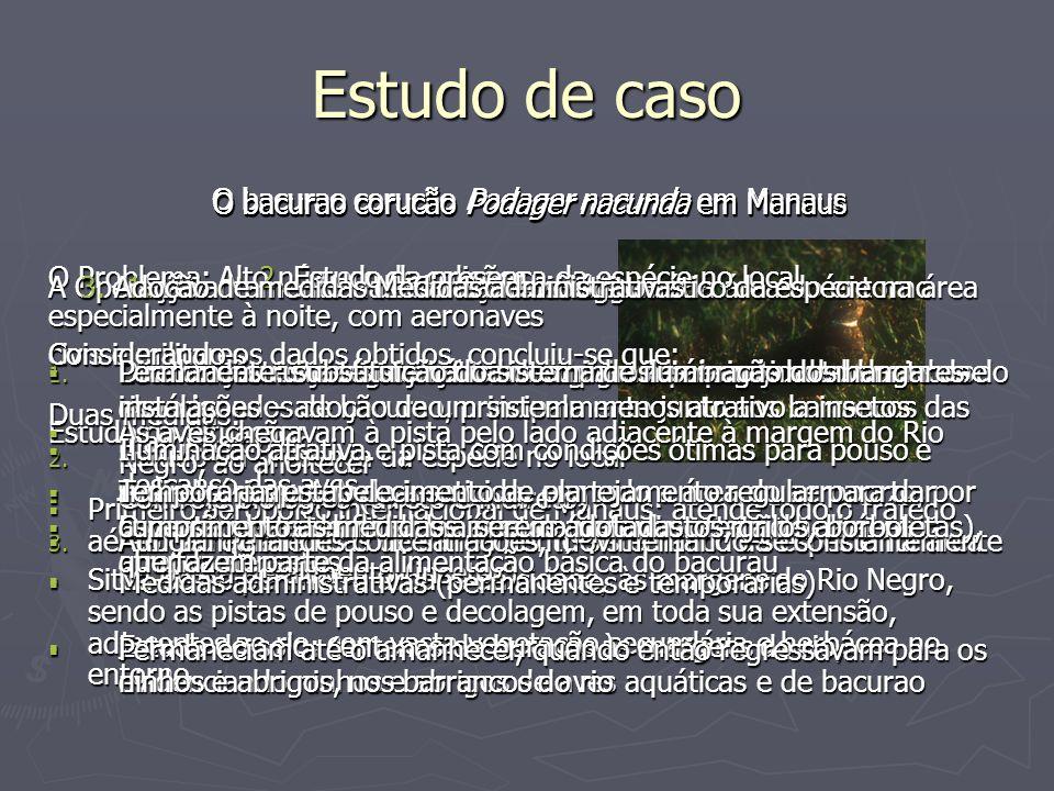 Estudo de caso O bacurao corucão Podager nacunda em Manaus