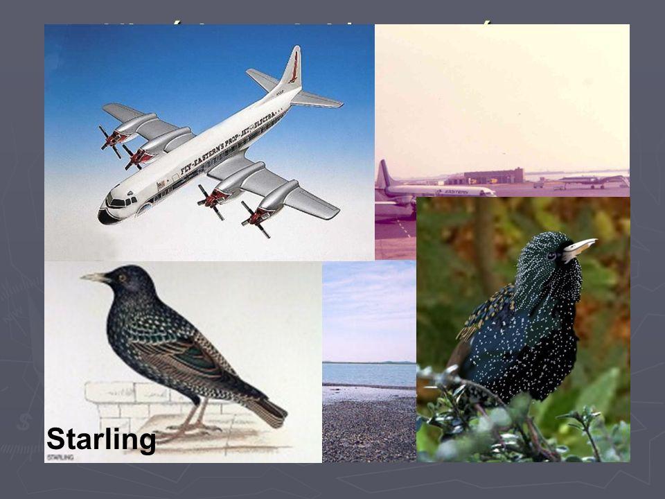 Histórico – Acidentes aéreos envolvendo Aves