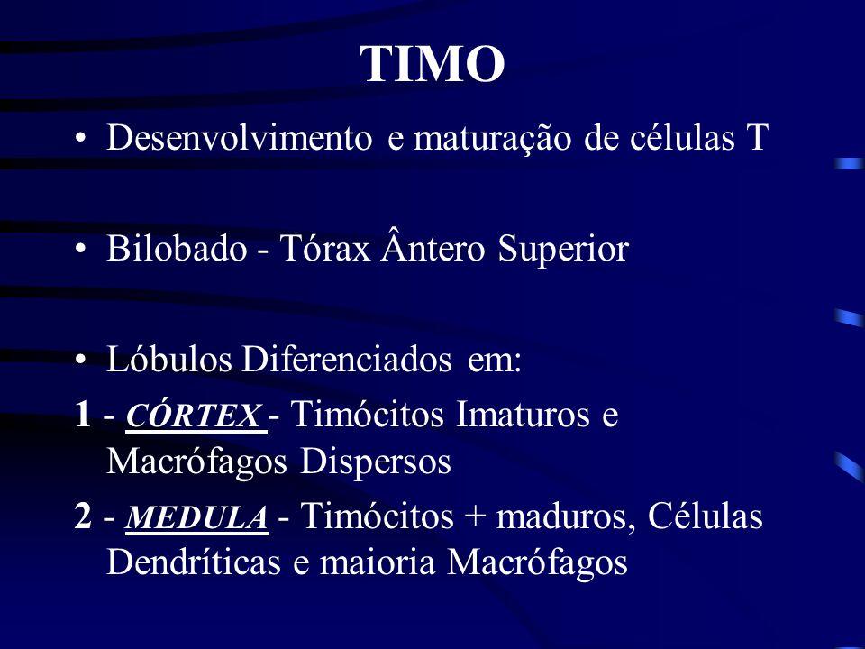 TIMO Desenvolvimento e maturação de células T