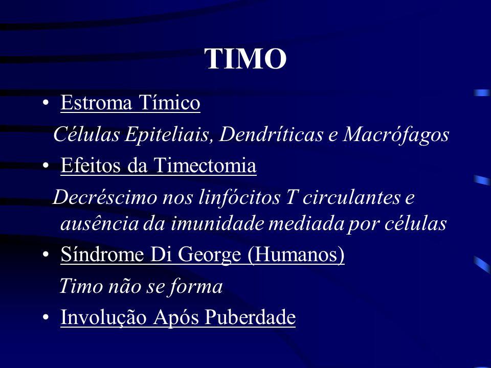 TIMO Estroma Tímico Células Epiteliais, Dendríticas e Macrófagos
