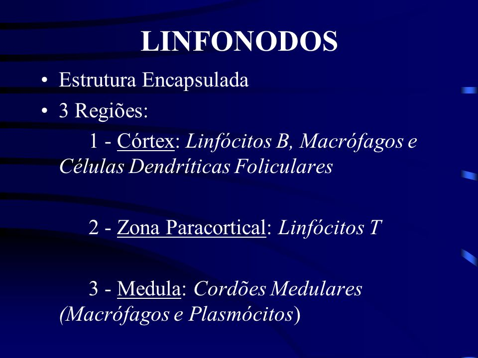 LINFONODOS Estrutura Encapsulada 3 Regiões: