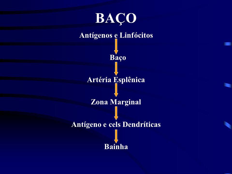 Antígenos e Linfócitos Antígeno e cels Dendríticas
