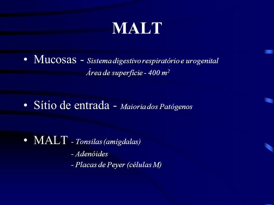 MALT Mucosas - Sistema digestivo respiratório e urogenital