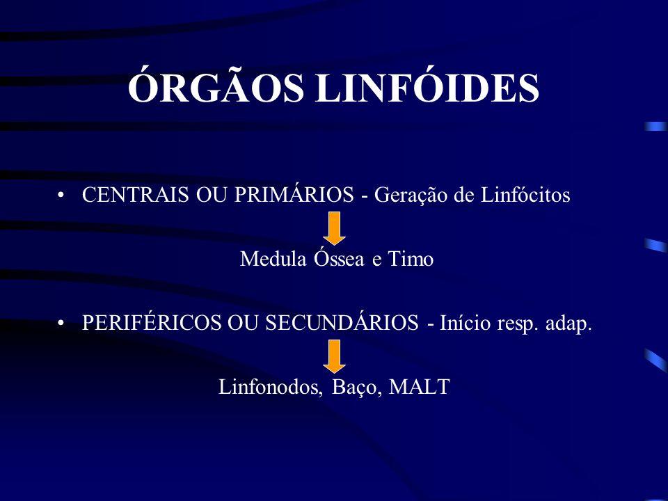 ÓRGÃOS LINFÓIDES CENTRAIS OU PRIMÁRIOS - Geração de Linfócitos