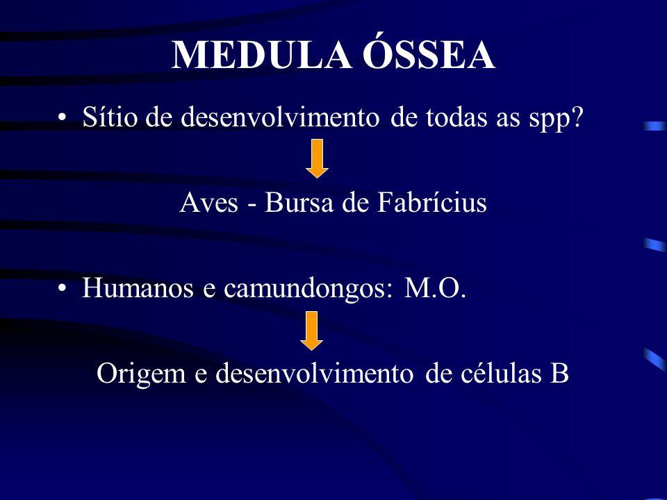 MEDULA ÓSSEA Sítio de desenvolvimento de todas as spp