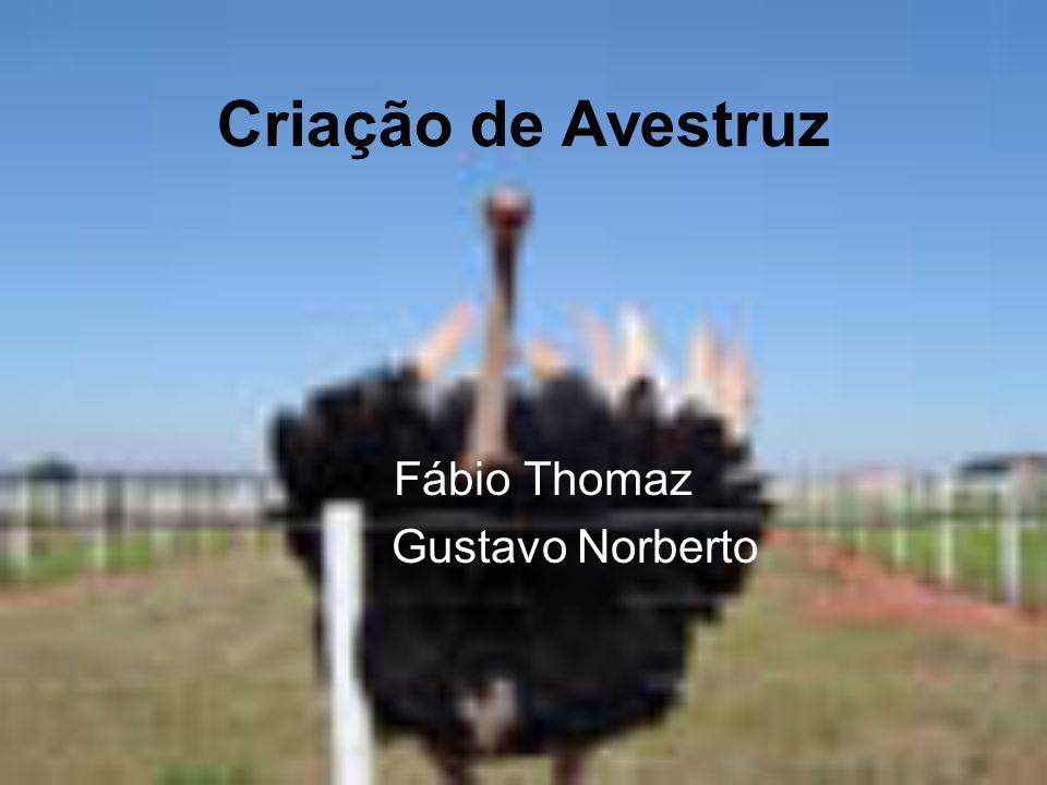 Fábio Thomaz Gustavo Norberto