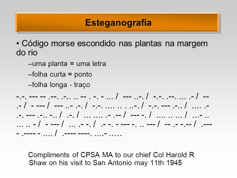 Esteganografia Código morse escondido nas plantas na margem do rio
