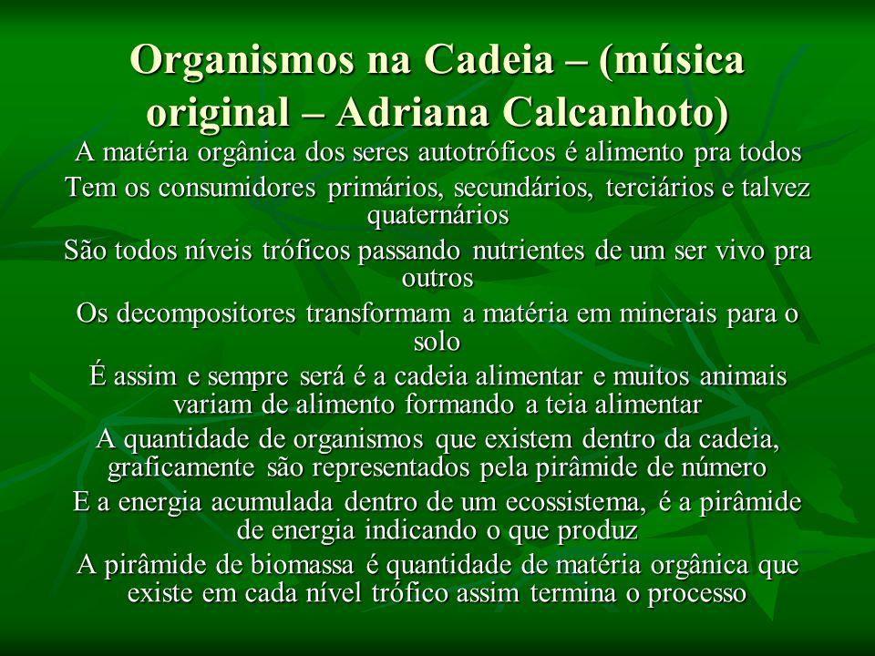 Organismos na Cadeia – (música original – Adriana Calcanhoto)