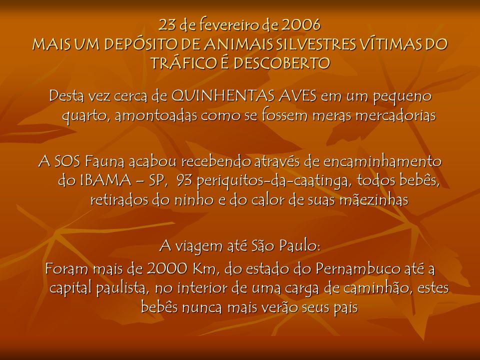 23 de fevereiro de 2006 MAIS UM DEPÓSITO DE ANIMAIS SILVESTRES VÍTIMAS DO TRÁFICO É DESCOBERTO