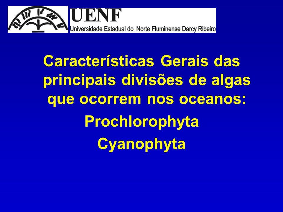 Características Gerais das principais divisões de algas que ocorrem nos oceanos: