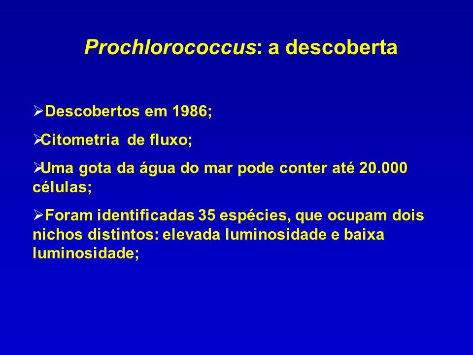 Prochlorococcus: a descoberta