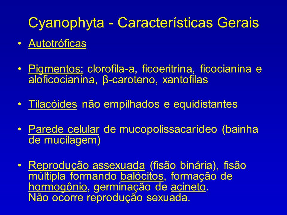 Cyanophyta - Características Gerais