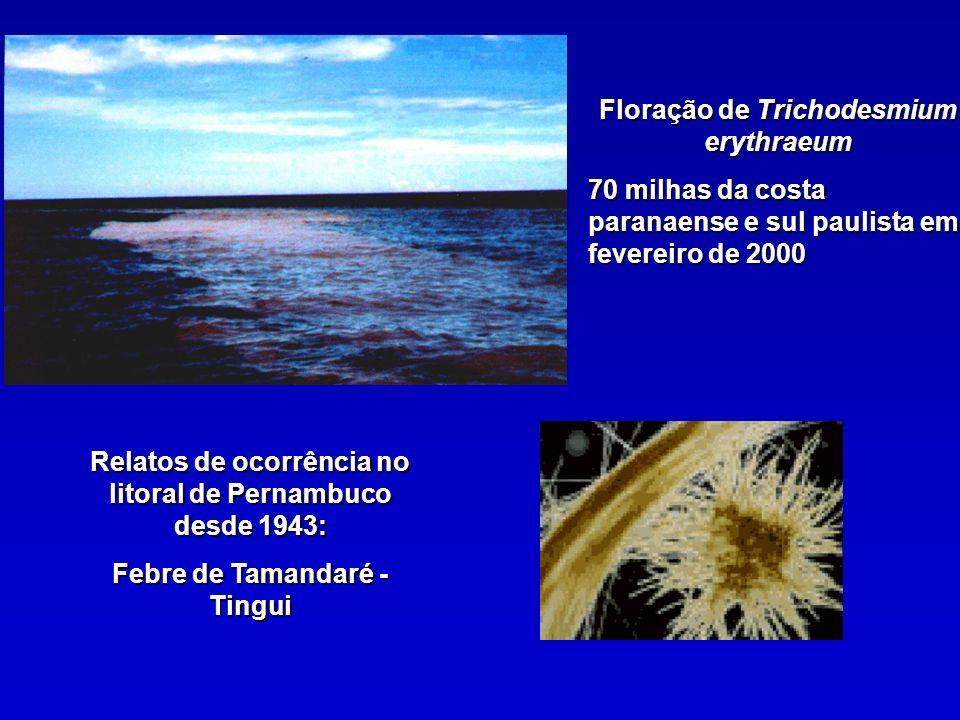 Floração de Trichodesmium erythraeum