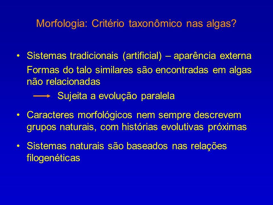 Morfologia: Critério taxonômico nas algas