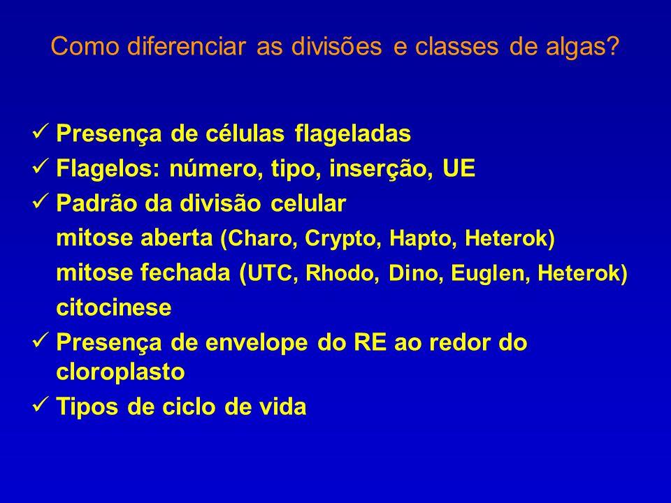 Como diferenciar as divisões e classes de algas