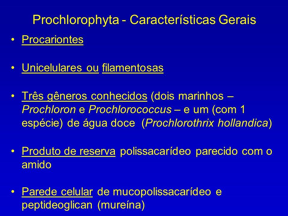 Prochlorophyta - Características Gerais