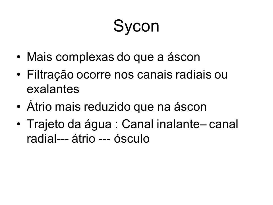 Sycon Mais complexas do que a áscon