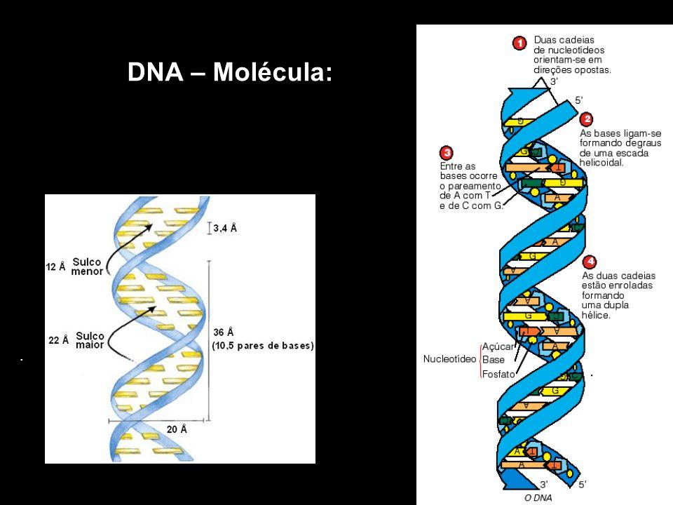 DNA – Molécula: .