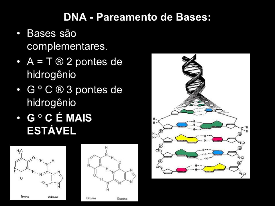 DNA - Pareamento de Bases: