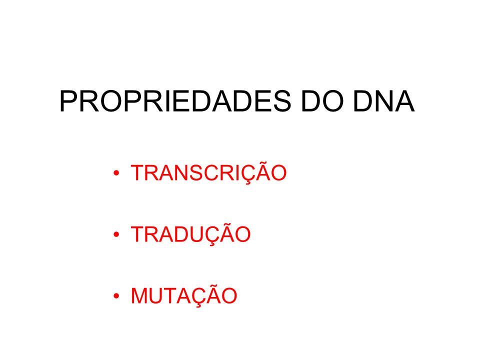 PROPRIEDADES DO DNA TRANSCRIÇÃO TRADUÇÃO MUTAÇÃO