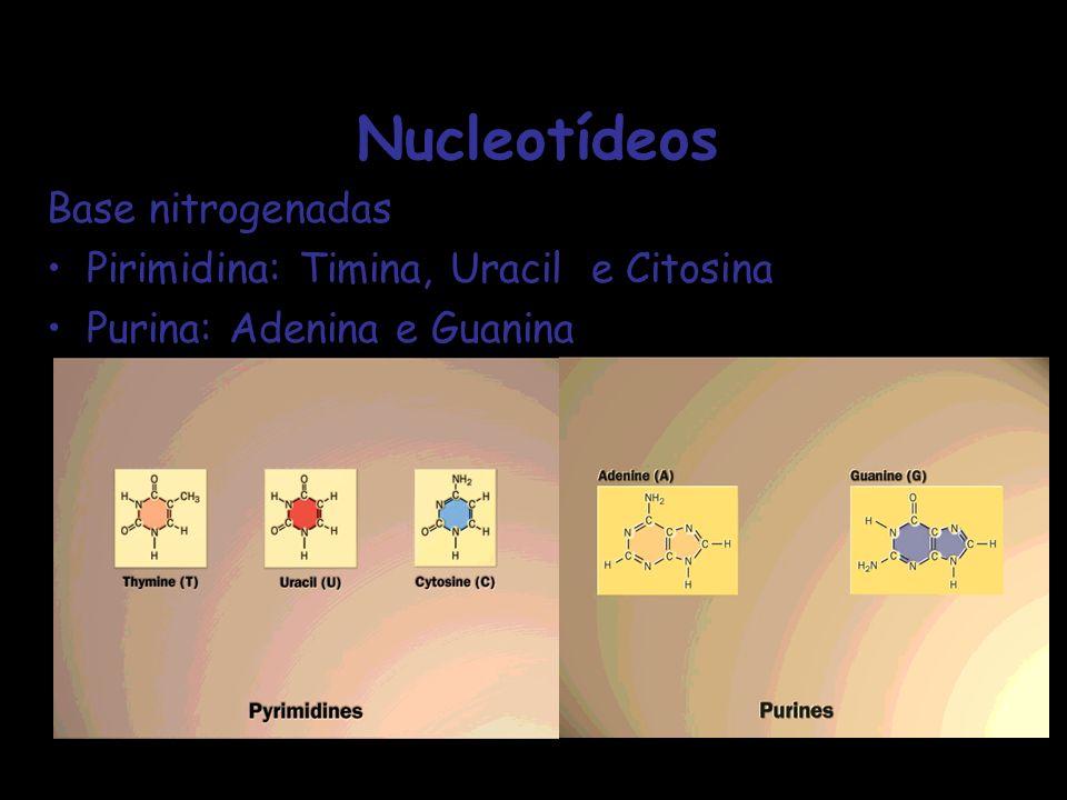 Nucleotídeos Base nitrogenadas Pirimidina: Timina, Uracil e Citosina
