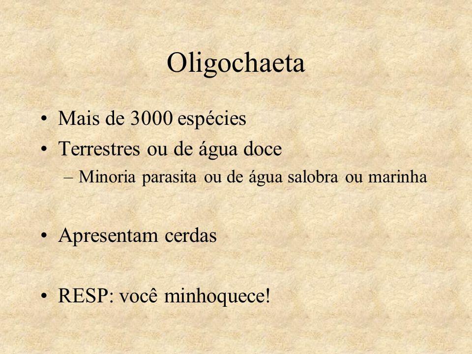 Oligochaeta Mais de 3000 espécies Terrestres ou de água doce